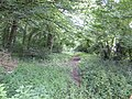 Fincham Drove through Scoot Wood - geograph.org.uk - 482195.jpg