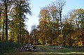 Fire wood after forest works at Castle Rozendaal Park - panoramio.jpg