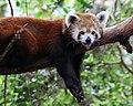 Firefox relaxing.jpg