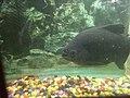 Fish12354.jpg