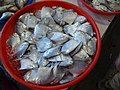 Fishes in the Wuqi fish market 02.jpg