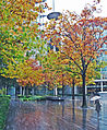 Flickr - Duncan~ - Autumn Rain.jpg