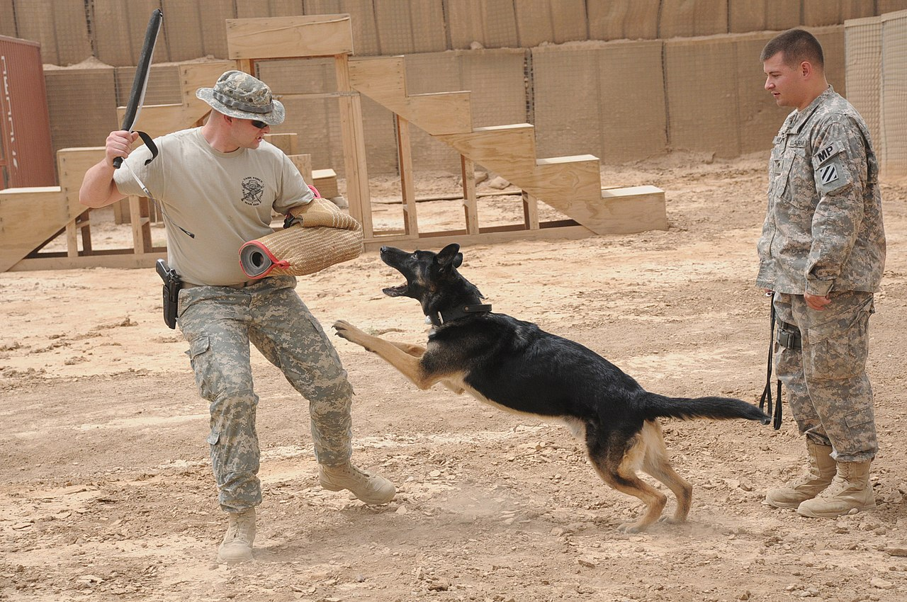 Tracking Dog Training Seattle