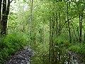 Flooded path in the Teufelsbruch swamp.jpg