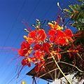 Flor de minas.JPG