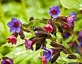 Flowers (14372191364).jpg