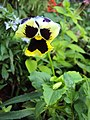 Flowers - Uncategorised Garden plants 178.JPG