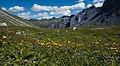 Flowers and Ducantal.jpg