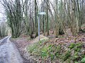Footpath in Covert Woods - geograph.org.uk - 336027.jpg