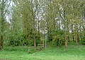 Footpath through the woods - geograph.org.uk - 1277058.jpg