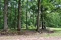 Forêt domaniale de Bois-d'Arcy 36.jpg
