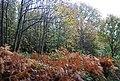 Fore Wood - geograph.org.uk - 1577168.jpg