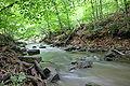 Forest-Creek-Eagleville-PA-USA.jpg