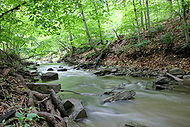 Forest-Creek-Eagleville-PA-USA.jpg