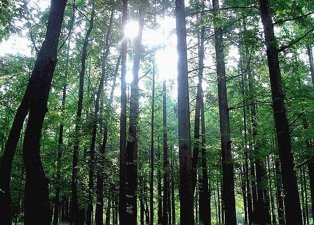 Forest Osaka Japan