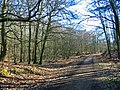 Forest Track in Hasley Inclosure New Forest Hampshire - geograph.org.uk - 686164.jpg