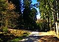 Forest Walks - panoramio.jpg