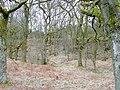Forest of Dean near Brandrick's Green - geograph.org.uk - 1746084.jpg
