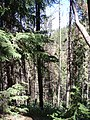 Forest on Panorama Mountain - panoramio.jpg
