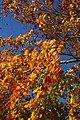 Forever Autumn - Flickr - Stevie-B.jpg