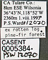 Formica adamsi whymperi casent0005384 label 1.jpg