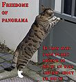 Freedome of panorama lolcat.jpg