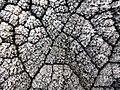 Frost textures (10986240573).jpg