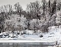 Frosted Trees (15826154453).jpg