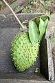 Fruit de l'arbre à pain sur l'île de Rolas (São Tomé).jpg