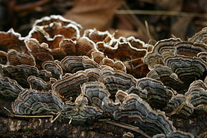 presently unknown fungus on an Ash log