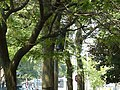 Funny temporary infrastructure, Crombie Park, 2013 08 21 (1).JPG