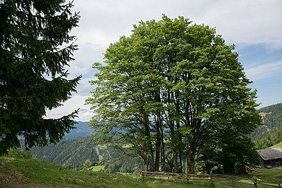 GLT 195 Rotmoarhütte 011.jpg
