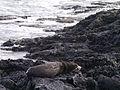 Galápagos Inseln, Ecuador (13917790115).jpg