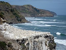 Coastline of cliffs, on one of which are a colony of numerous white seabirds seen from a distance.