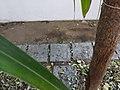 Gap between mulch layer and wall.jpg