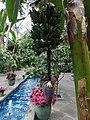 Garden Court - US Botanic Gardens 15.jpg