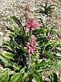 Gardenology-IMG 4978 hunt10mar.jpg