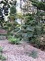 Gardenology.org-IMG 2517 ucla09.jpg