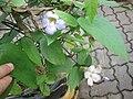 Gardenology.org-IMG 7897 qsbg11mar.jpg