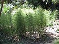 Gardenology.org-IMG 9614 rbgm10dec.jpg
