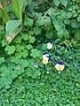 Gardens in Baghdad 36.jpg