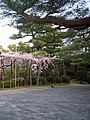 Gardens of Heian Shrine 平安神宮神苑 - panoramio.jpg