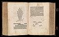 Gart der gesuntheit - Ortus sanitatis (Herbarius) MET DP358435.jpg