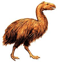 Gastornis 1917 white background.jpg