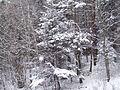 Gdynia - zaśnieżone drzewa - 001.JPG