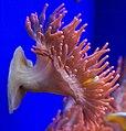 Genoa - Aquarium 16.jpg