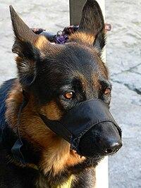 Dog Muzzles By Breed Com