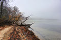 Gfp-wisconsin-madison-misty-lakeshore.jpg