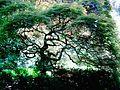 Giardini di Ninfa.jpg