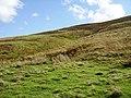 Glenmuck Height - geograph.org.uk - 247808.jpg